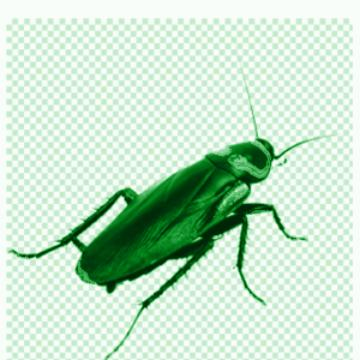 woodroach