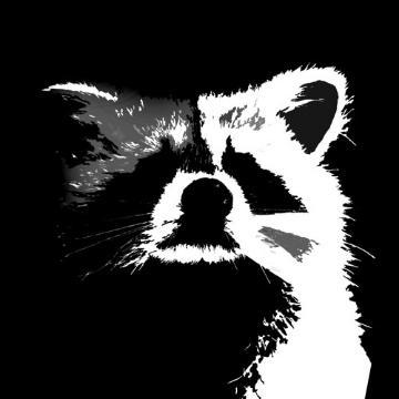 RaccoonBeatz