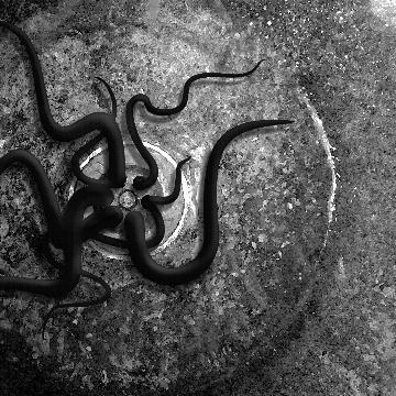 DeepSpaceOctopus