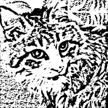 Dangercat