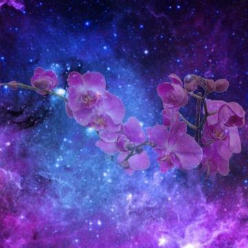 astralorchid